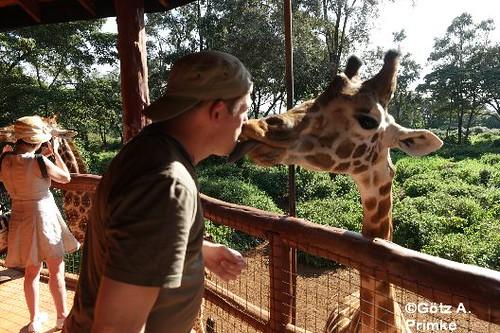 Afrika_Kenia_04_Nairobi_Giraffe_Center_Dez_2015 _019