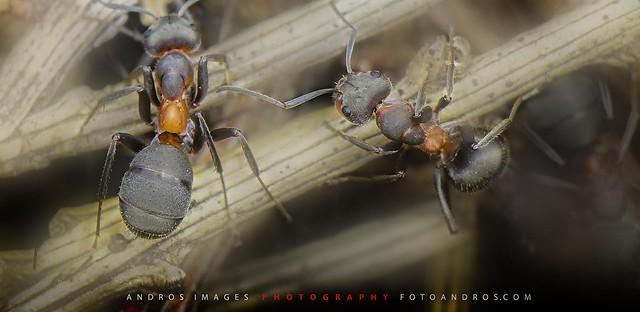 A very hard working animal - The life of the ants // UN animalito muytrabajador - La vida de las hormigas.