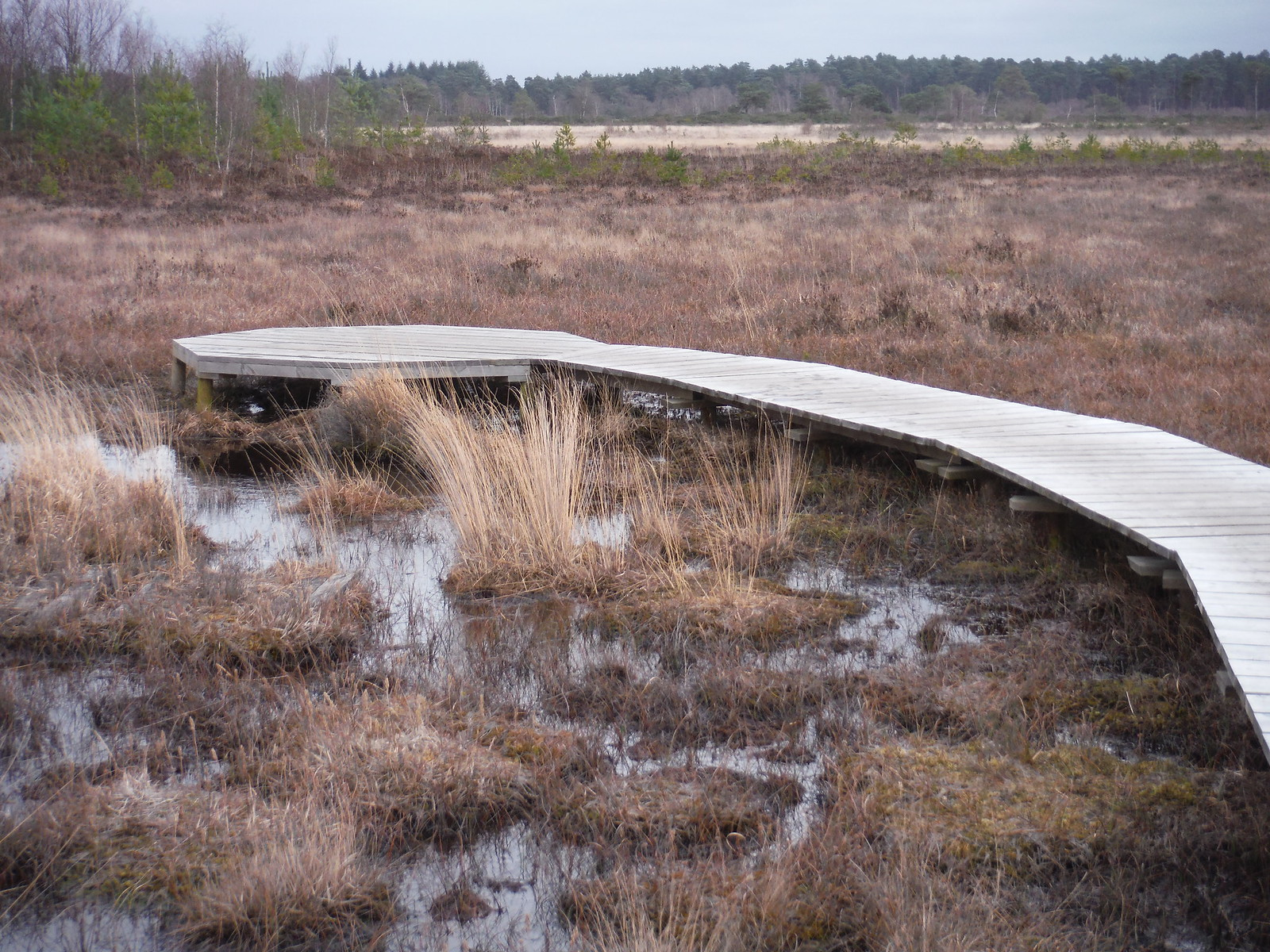 Pine Island Seating and Relaxation Area in Bog, Thursley Common SWC Walk 144 Haslemere to Farnham - Thursley Common Extension (Pudmore Pond Extension-within-the-Extension)