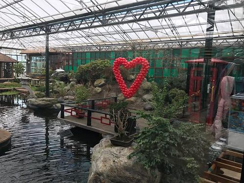 Ballonnenhart Valentijnsdag Watertuin Naaldwijk