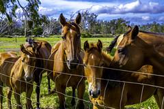 Waimea/Kamuela on the Big Island