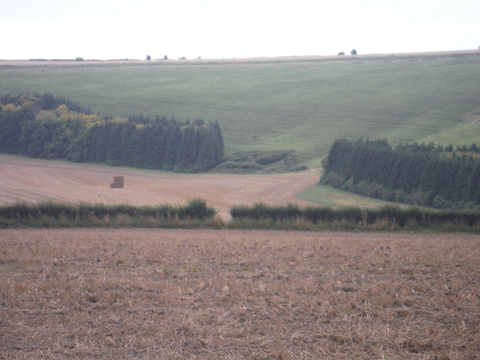 The Hedge Gap to aim for from the large field SWC Walk 250 Tisbury Circular via Alvediston