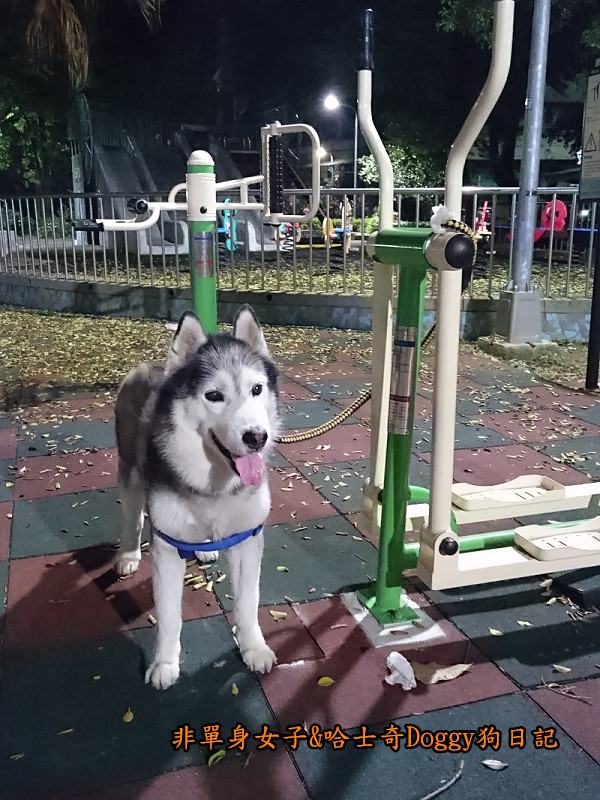 Doggy颱風27
