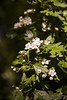 branches with green leaves and white flower blooming by CloudMineAmsterdam