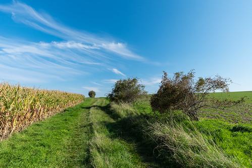 Wir wandern durch die Felder