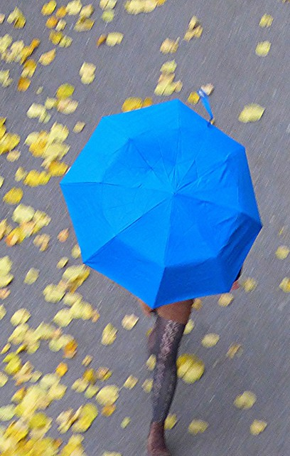 a blue umbrella in the autumn