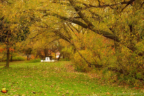 park autumn newyork fall nature colors bench season landscape outdoors buffalo unitedstates image photograph tonawanda isleview icture etbtsy