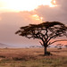 A lonely tree - Serengeti National Park, Tanzania by Maria_Globetrotter