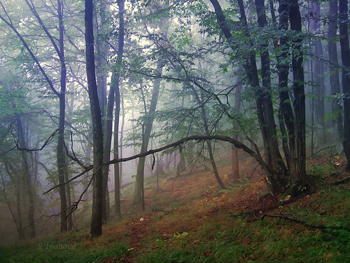 autumn mist mountain color tree fall nature colors forest landscape природа гора мъгла rivanova риванова