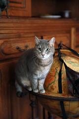 Les chats devraient devenir les maitres du Monde