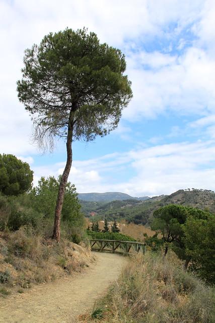 Jardín Botánico-Historico La Concepción, Málaga