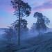 Dawn Mist by Thomas Heaton