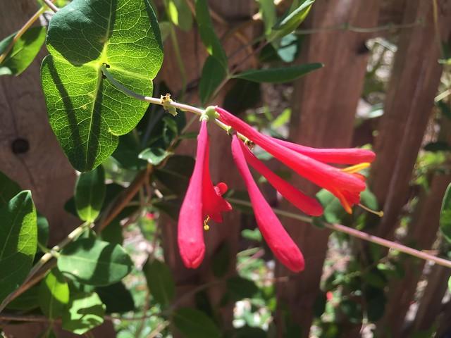 Native Rain Garden Plants