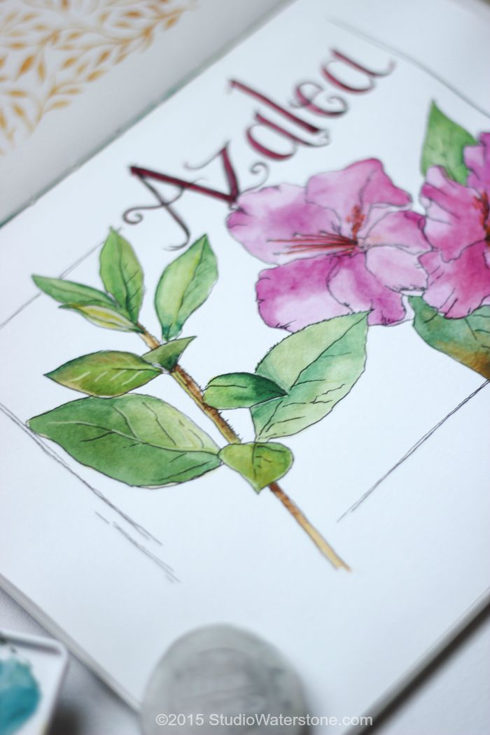 Sketchbook: Azaleas and Honey