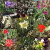 My garden this morning #springishere