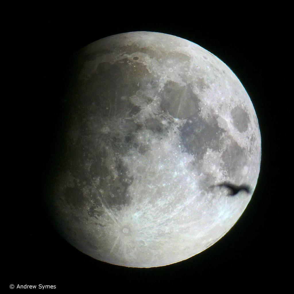 Lunar Eclipse & Bird, September 27, 2015