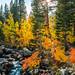 Sony A7R2 California Fall Colors Autumn Foilage Fine Art High Sierras! Dr. Elliot McGucken Sony FE 24-240mm f/3.5-6.3 OSS Lens SEL24240 Fine Art Landscape & Nature Photography