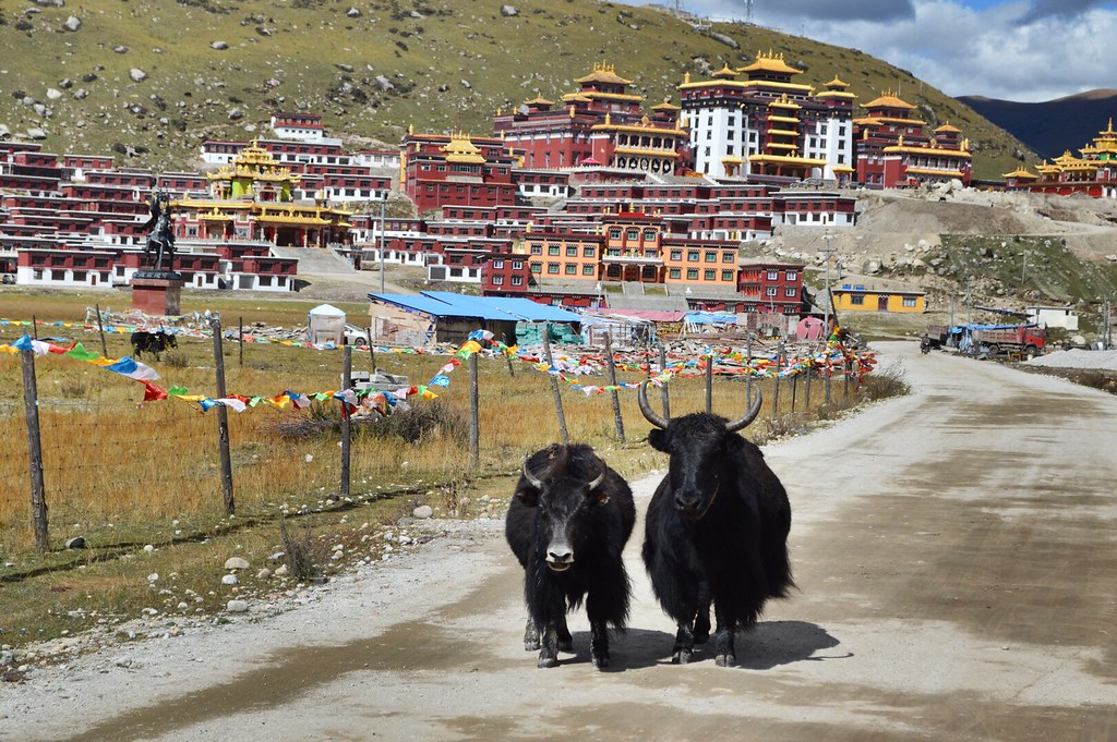 Yaks in front of a Tibetan monastery