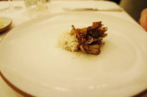 Hen of the Woods Mushroom