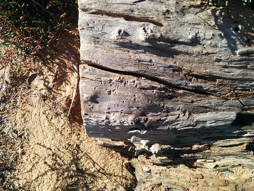 Wood, Bois, Holz, Îles des Sidrières