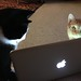 Buddy and Baxter marvel at bird videos by Daisybax