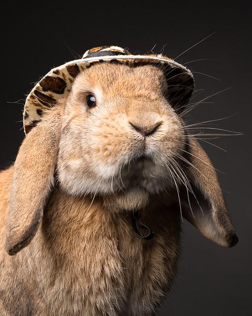 Sheriff Bunny
