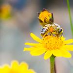 21. November 2015 - 13:03 - Abelha bee