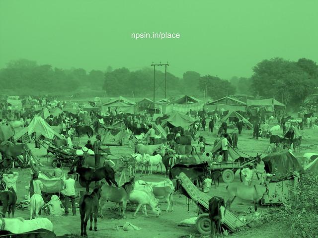Animal Fair: Mules / Donkey Fair: A full view of fair