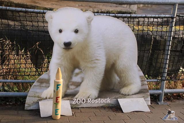 Eisbär Fiete im Zoo Rostock 12.12.2015   1