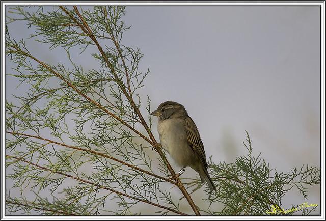 Petit oiseau de Camargue (3)