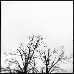 Grey.Cold.Wintery. #firstsnow