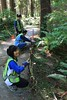North Creek blackberry wattles