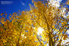 fall color by Eric 5D Mark III