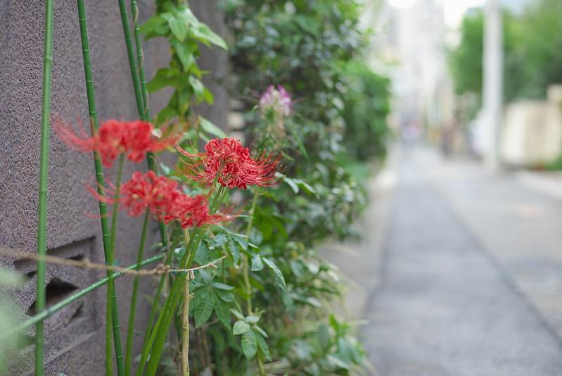 東京路地裏散歩 藍染川フォトウォーク下見 2015年9月19日
