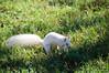 Albino Squirrel - Washington DCAlbino Squirrel - Washington DC