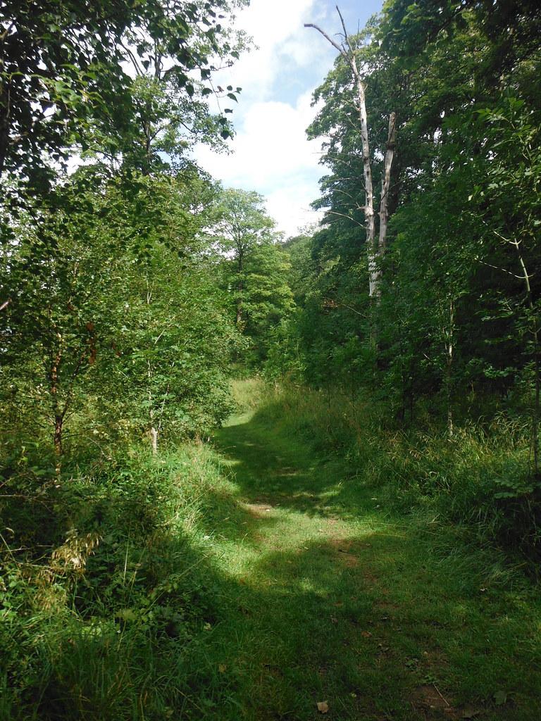 Grass Wood 1