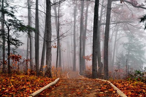 autumn ontario canada fall fog forest mood niagaraescarpment brucetrail greensville spencerfallsarea