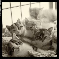 kitten pile 3
