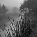 foggy morning by teknoec