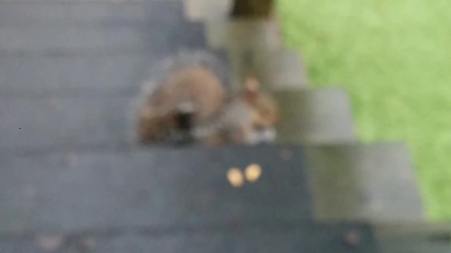 Squirrel on the back step.