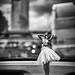 Dashboard Dolly por Victor Garza