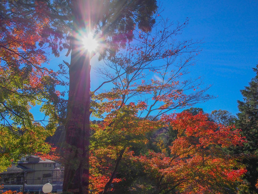 Kamakura | Autumn Leaves