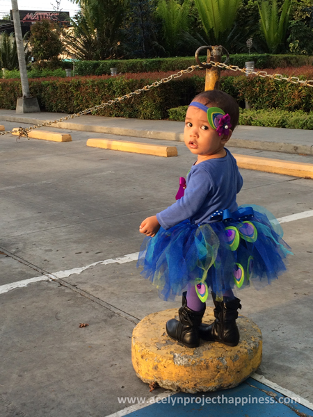 Little Peacock on the loose!