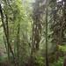 uetliberg jungle by Toni_V