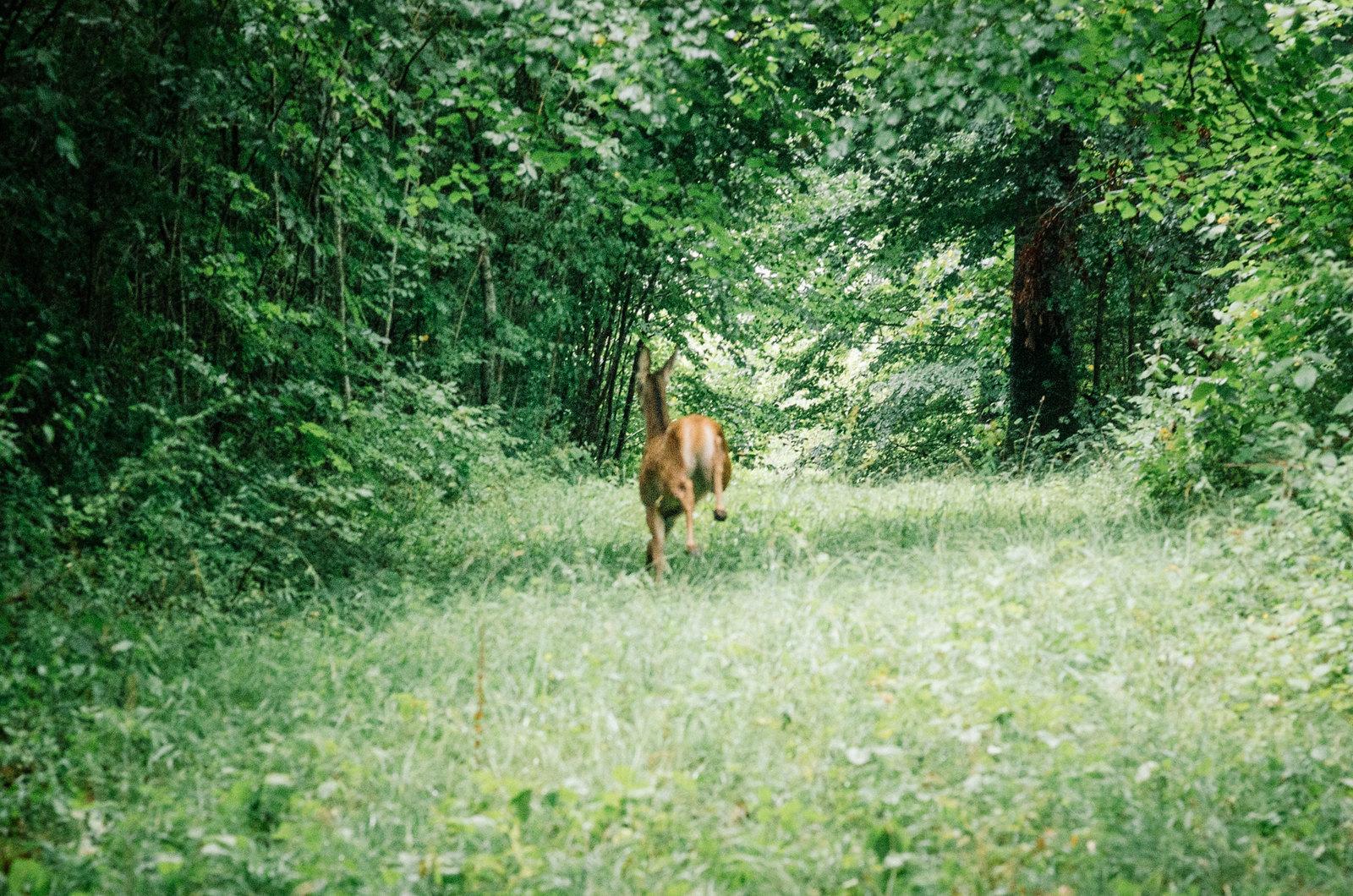 Observer les animaux - Forêt d'Auberive - 10 secondes de bonheur
