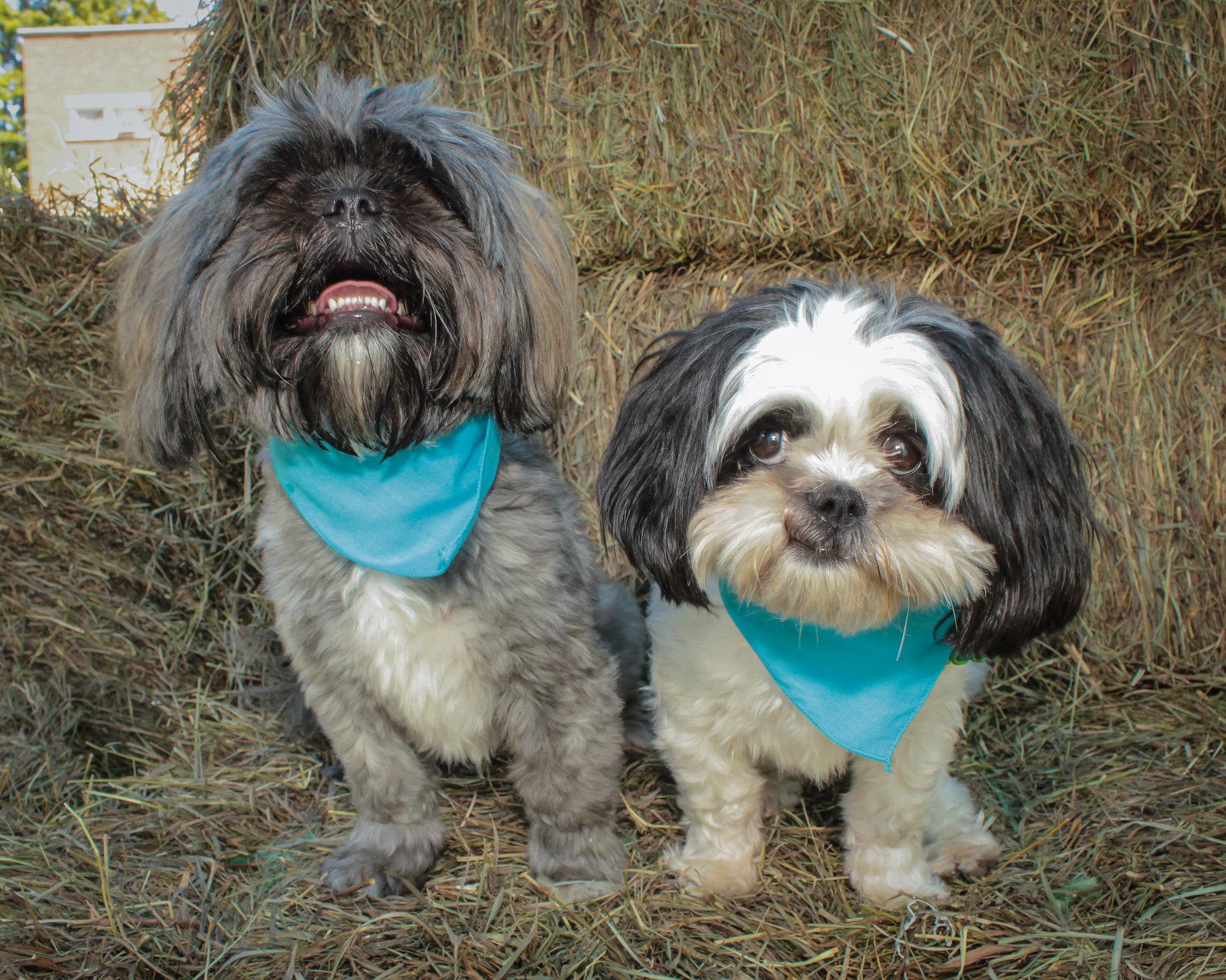 Oreo & Jackson