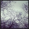 Lovely rainy afternoon :) #365grateful #rain #branches #trees