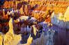 DSC_0132 bryce canyon at sunrise 850