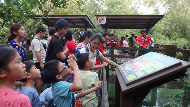 Families on a guided tour at Pasir Ris Mangrove Boardwalk