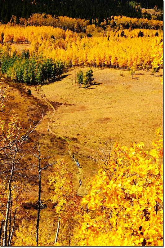 Fall colors at Kenosha Pass, Colorado (27)
